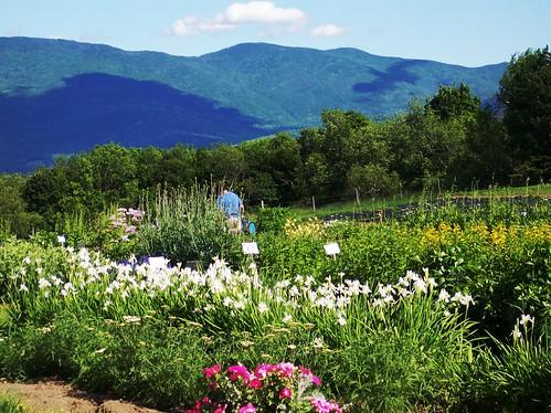 vontrapp gardens