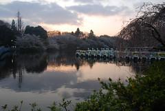 inokashira morning
