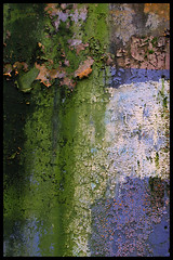 Green and blue (Eric Flexyourhead) Tags: blue green texture rotting vancouver moss peeling chinatown decay olympuse300 algae cracking penderstreet zd 1445mm
