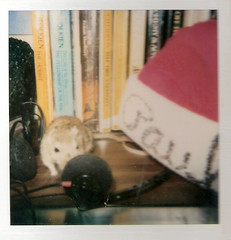 Paulette's room at 13 (~Lessaweaver) Tags: gerbil 1986 poloroid