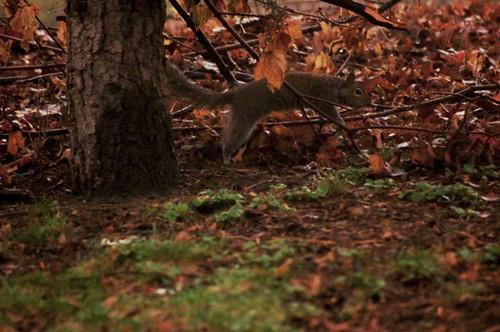 Squirrel Hop!