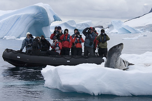 Zodiac and Posing Leopard Seal