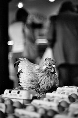 The Chicken & The Eggs (monochrome) (VEB Zardoz the Gravyboat) Tags: street uk blackandwhite bw chickens chicken film apple monochrome southwales wales 35mm 50mm prime mono blackwhite mac fuji dof pentax takumar unitedkingdom bokeh britain candid egg cymru streetphotography documentary streetlife bn elderly software adapter m42 eggs iphoto converted radioactive welsh analogue manual filmcamera brecon expired hen schwarzwe