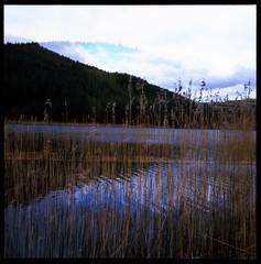 pagan poetry - by Norma Desmond