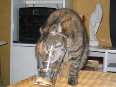 Cat in a Glass