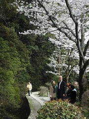 The Pleasures of Spring (whitetip) Tags: trees white flower tree green smile japan garden spring kyoto couple view walk sakura cherryblossoms stroll glance pleasure hanami philosopherspath