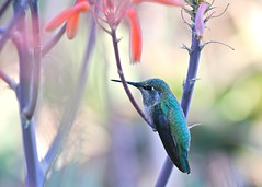 Zen Pastel (Don Baird) Tags: spring peace hummingbird pastel quality restful peaceful quietude momentofrest colorphotoaward impressedbeauty stockthepark thenaturegroup