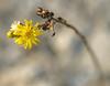 * (olvwu | 莫方) Tags: usa macro yellow ga georgia afternoon dof yellowflower savannah silky jungpangwu oliverwu oliverjpwu olvwu jungpang 莫方 吳榮邦