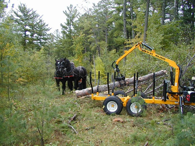 Horse logging and small-scale equipment demo, Grand Rapids MN