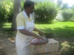 jamaica 179