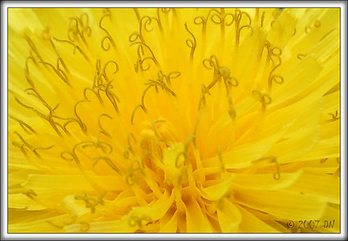 PGY flower part DSCF1789