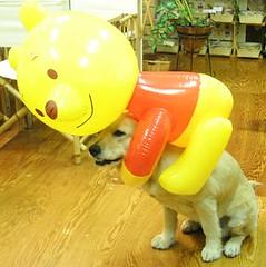 Winnie-the-Pooh on Dog