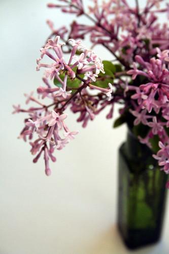 tiny lilac