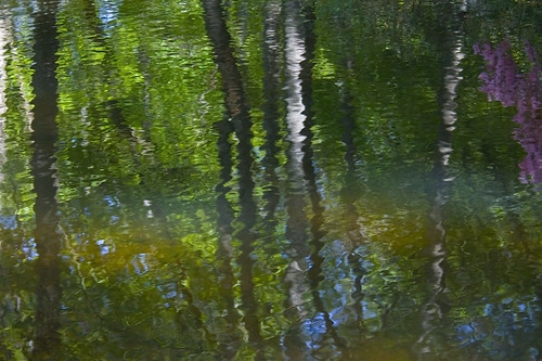 spring reflections 1