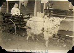 vintage: baby grandpa on a goat cart! (deflam) Tags: boy arizona baby west cute animal vintage weird globe infant carriage ride desert goat riding western cart 1917 1916 miningtown goatcart