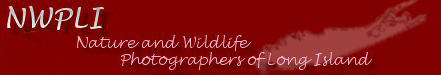 Proud Member of NWPLI - Nature and Wildlife Photographers of Long Island