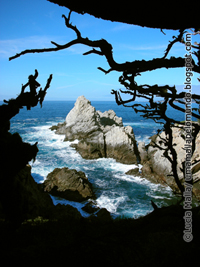 ©Point Lobos 7