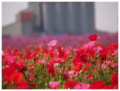 Flowers 070523 #01