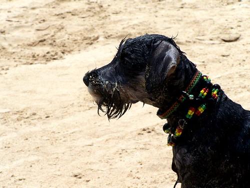 El perro de Bob - Nando © 2007 -