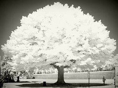 Infrared in Lucca (Giorgio Verdiani) Tags: tree alberi digital ir photo blackwhite lucca exposition infrared walls mura biancoenero digitalinfrared sonydscf707 infrarosso