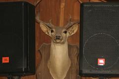 Deer speakers
