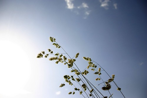 Grass in the sky II
