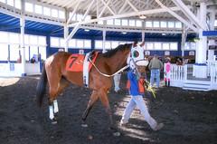 2016-12-02 (9) r3 #7 Tigers Bop (JLeeFleenor) Tags: photos photography md maryland marylandracing marylandhorseracing laurelpark racing track racetrack horses thoroughbreds equine equestrian cheval cavalo cavallo cavall caballo pferd paard perd hevonen hest hestur cal kon konj beygir capall ceffyl cuddy yarraman faras alogo soos kuda uma pfeerd koin    hst     ko  paddock outside outdoors