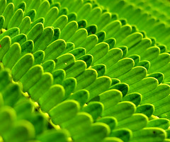 Look up! (Daniel Schwabe) Tags: green leaves repetition blueribbonwinner i500 interestingness211 abigfave flickrjobdiff borderingperception superhearts explore9apr07 top30green lpgreen