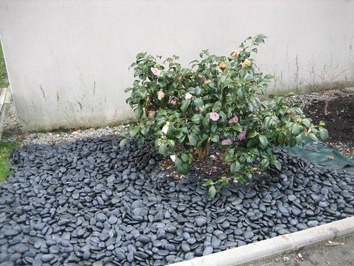 Du Japon dans un jardin: mars 2007
