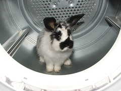 Rabbit in the Dryer!