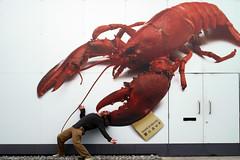 giant lobster hits again (dartar) Tags: friends london giant scott camden explore honest lobster blogged horrible crustacean accidental painful gi invertebrate nw1 londonist madeinheaven idea2007 anewgroup chezkangan elisa12 cfye