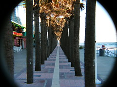 Daytona beach (blah blah photos...blah blah blah) Tags: ocean trees winter beach water hotel fuji florida kodak games sidewalk palmtrees boardwalk sidwalk eastcoast s3000 z740