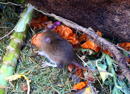Gardening Tips - Composting
