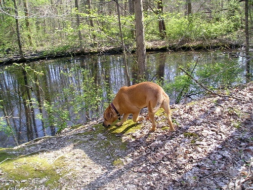 Sniffing by the pond