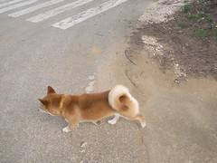 大東犬 画像3