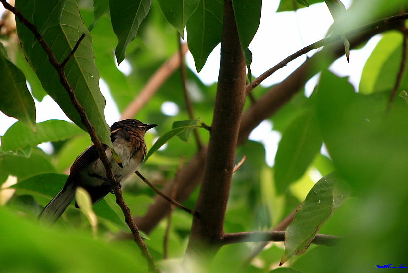 Little Bird @ Bangkok