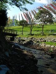 千葉県 酪農のさと 小川で水浴び