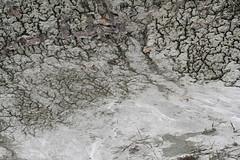 rock flour (withrow) Tags: canada spring earth alberta silt glacial rockflour