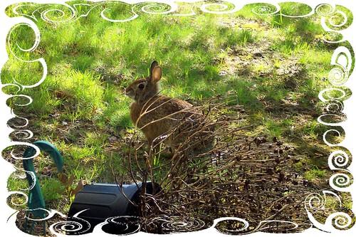 bunny in frame