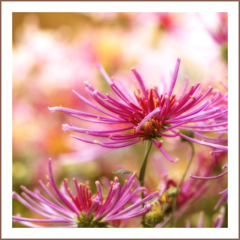 .....pink strands.....