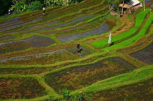 Indonesia - Bali:)
