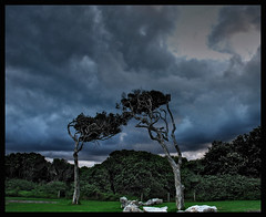 Windy Trees (Earlette) Tags: trees sky colour beach clouds photoshop nikon windy hdr d80 earlette wallabipoint flickrdiamond tribehorizon