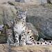 Djamila and her cub posing