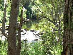 PIC_0388 (hollis_corey) Tags: mountains water fishing snowy nsw flyfishing trout snowymountains troutfishing khancoban swampyplainsriver