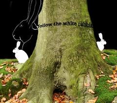 follow me (Twan van Keulen) Tags: rabbit followme twanvankeulen