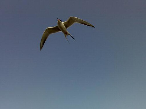 Tern!
