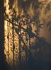 Ornate Shadow (olvwu | 莫方) Tags: shadow usa wall ga garden georgia handrail savannah ironwork jungpangwu oliverwu oliverjpwu olvwu jungpang 莫方 吳榮邦