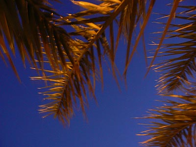 palmes....jpg
