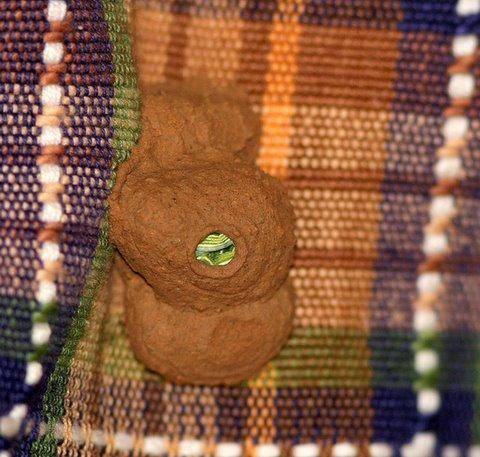 Wasp's nest with Caterpillar Inside Bannerghatta JLR 19 May 07