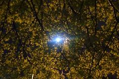 The light shines through (skonen_blades) Tags: street trees light art nature leaves night photography dusk ubc through shining